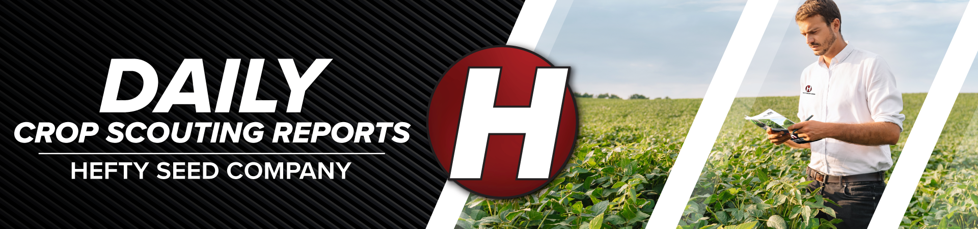 Daily Crop Scouting Reports