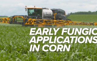 Early fungicide applications in corn mobile article header image