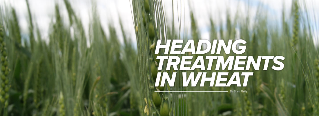 Heading Treatments in Wheat mobile article header image