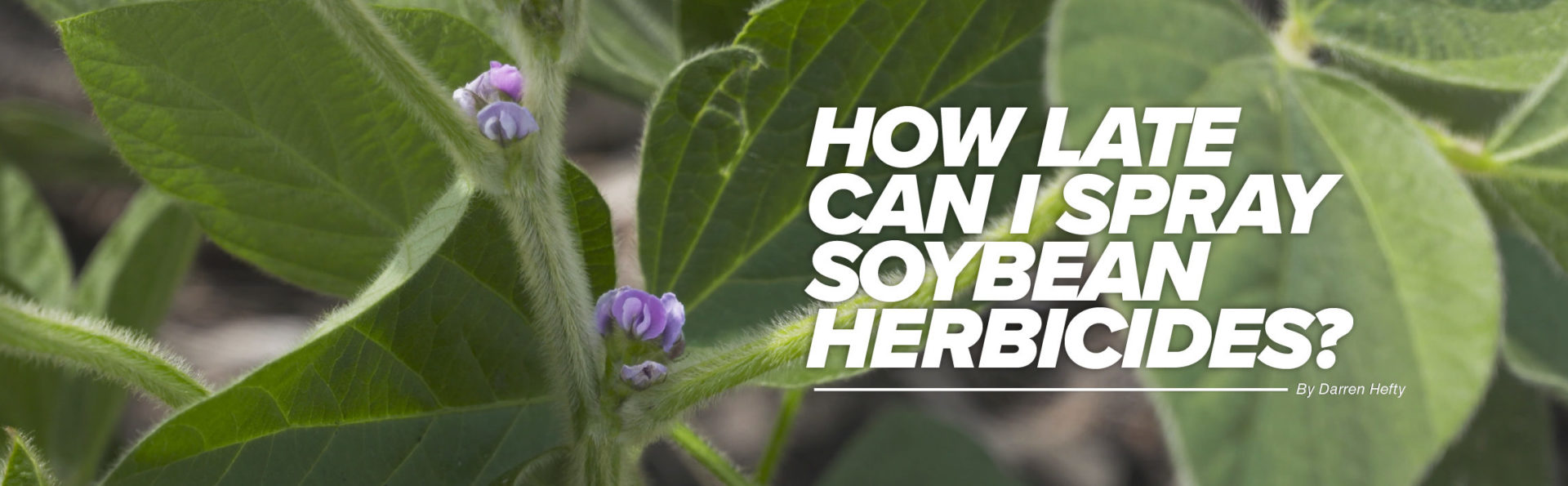 How late can I spray soybean herbicides article header image