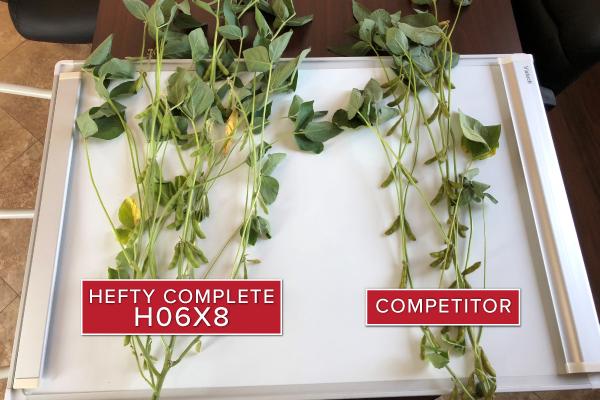 Hefty Brand Soybeans 06X8 in Hillsboro, ND 2018