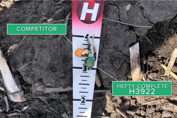 Hefty Brand Corn 3922 Treated with Hefty Complete Seed Treatment compared to competitor seed.