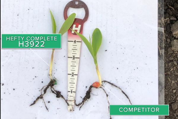 Hefty Brand Corn 3922 vs. competitor 2020