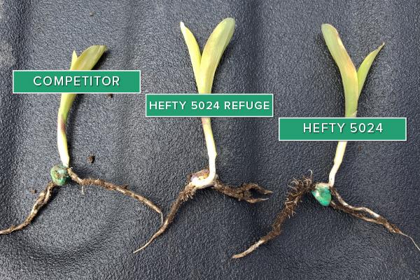 Hefty Brand Corn 5024 in Sheldon, IA May 21, 2020
