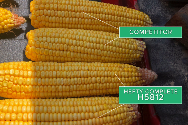 Hefty Brand Corn 5812 Treated with Hefty Complete Seed Treatment compared to competitor seed in Illinois.