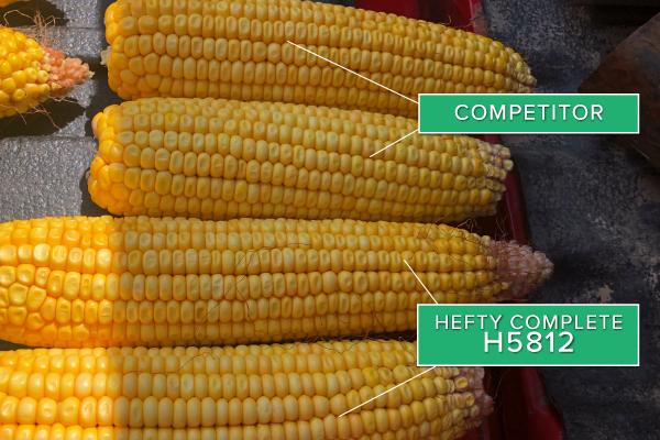 Hefty Brand Corn 5812 in Princeton, IL 2019
