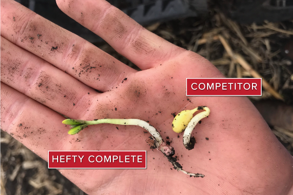 Hefty Brand Soybeans treated with Hefty Complete Seed Treatment in Webster, ND 2019