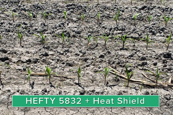 Hefty Brand Corn 5832 Treated with Hefty Complete Seed Treatment in Wakonda, SD.