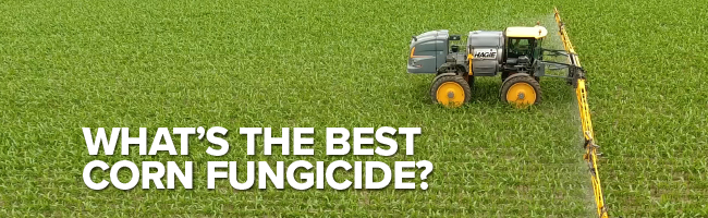Article Header image: What's the best corn fungicide?